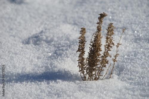 Close-up Of Frozen Tree During Winter Fototapeta