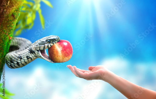 Fotografie, Obraz Snake in paradise giving an apple fruit to a woman