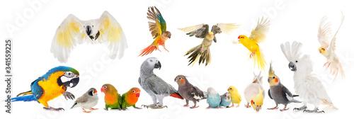 Fotografiet group of birds