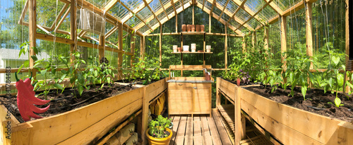 Fotografiet Panoramic view of a greenhouse with plants growing in June