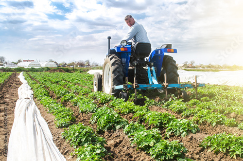 Stampa su Tela Farmer tillage cultivates a field plantation of young Riviera potatoes
