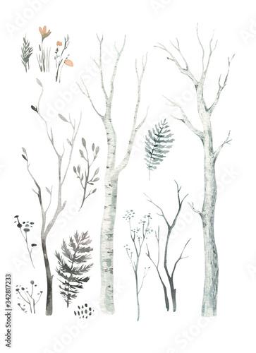 Fotografia Scandinavian Watercolor natural set of green trees, birch and pine, mountain ash, forest
