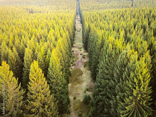 Valokuva Aerial drone view of coniferous forest sunlit by the evening sun in spring
