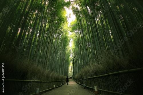 Fotografia Walkway Amidst Bamboos At Park