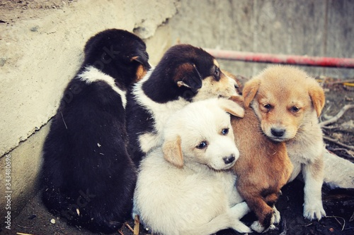 Close-up Of Stray Puppies Fotobehang