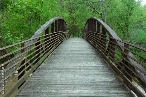 Fotografie, Tablou Wooden Footbridge Amidst Trees In Forest