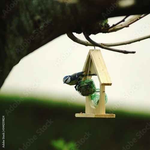 Fotografering Close-up Of Bird Perching On Birdhouse Against Sky