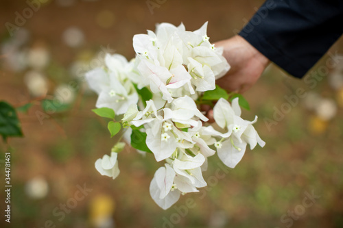 Photo lady hold a bunch of white bougainvillaea