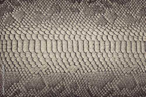 Fotografija Snake skin background. Close up.