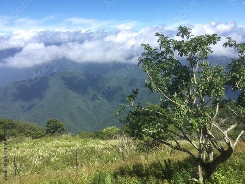 Obraz na plátně Lush landscape of Mount Ibuki
