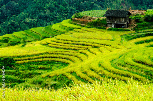 Wallpaper Mural Scenic View Of Rice Paddy Field