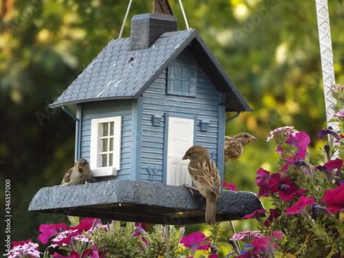 Fotografiet Sparrows By Birdhouse Over Plants