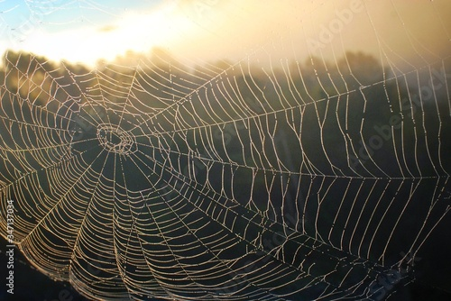 Canvastavla Spiderweb In Dew