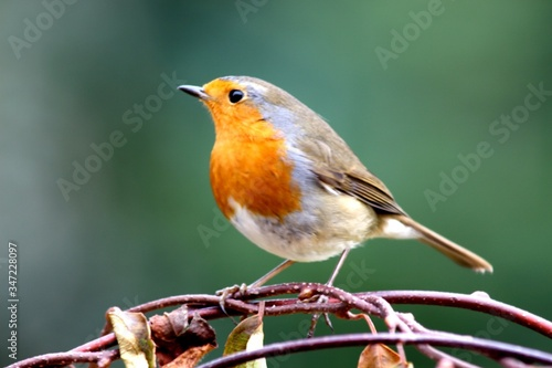 Photo Robin On Branch
