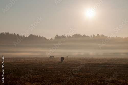 The cows that pasturing in the meadow of brown color far away Fototapet