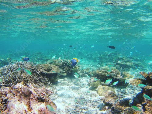 Obraz na płótnie Fishes Swimming In Sea