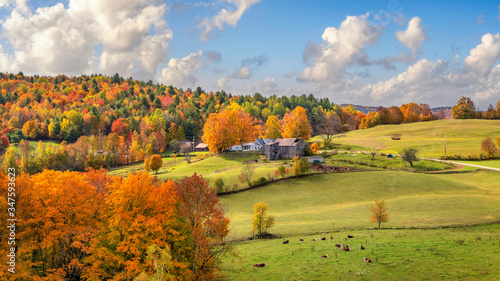 Fotografie, Obraz Brilliant golden fall colors in Vermont Countryside farm during Autumn near Wood
