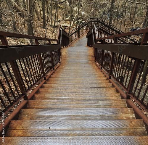 Tablou Canvas Footbridge Along Trees