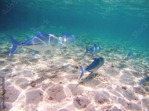 Obraz na płótnie Close-up Of Fishes Swimming In Sea