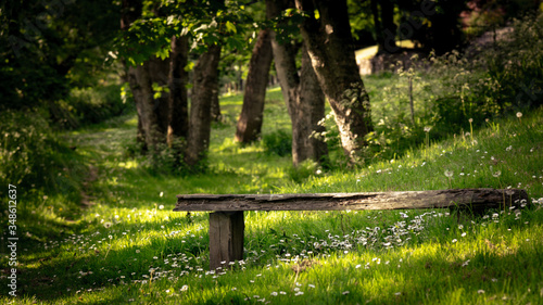 Fotografering bench in the park with white daisy flowers , Ironbridge, England, Europe