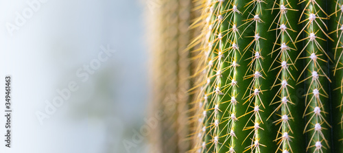 Foto background of a cactus with long spines