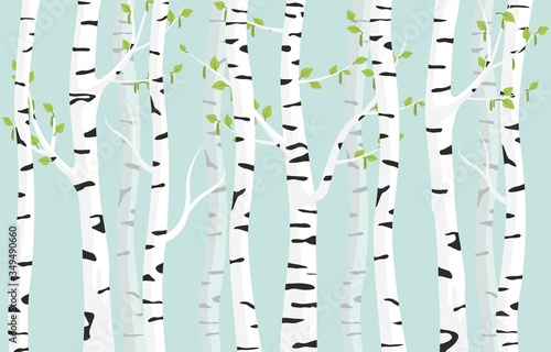 Tableau sur Toile Birch forest background