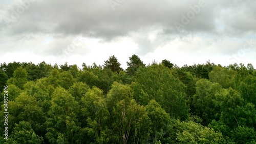 Photo View Of Treetops In Forest