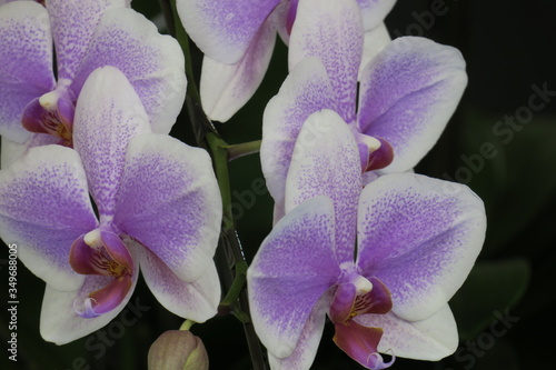 Photo Close-up Of Purple Orchids