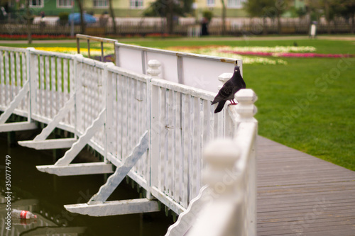 Canvastavla Bird On Railing Along Footbridge
