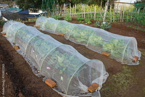 Obraz na plátne Cover for the vegetables cultivation of the field of the frost prevention