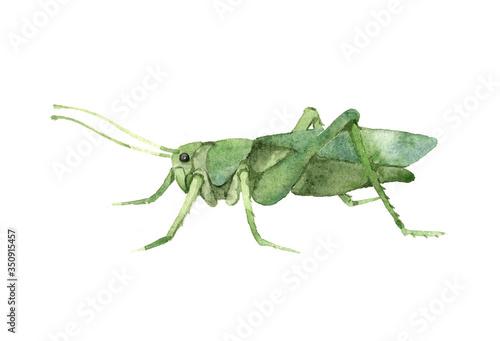 Fotografie, Tablou decorative green grasshopper in profile, invertebrate insect, voracious locust,