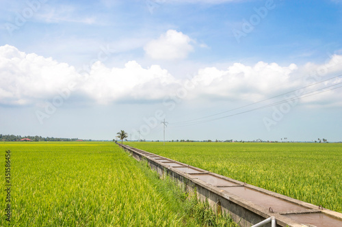 Photo Tranquil View Of Paddy Field Against Cloudy Sky