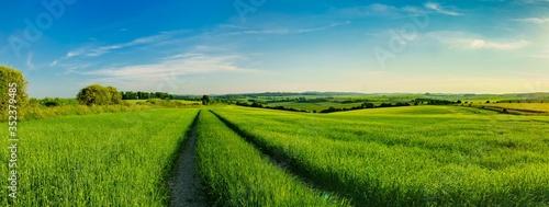 Obraz na plátně Scenic View Of Rice Field Against Sky