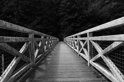 Fotografie, Tablou Vanishing Footbridge Leading Towards Forest