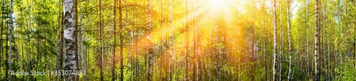 Photo Wide panoramic beautiful sunny spring summer birch tree forest landscape