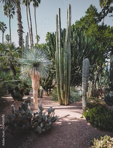 Panorama of The Majorelle Garden is a botanical garden and artist's landscape garden in Marrakech, Morocco Fototapete
