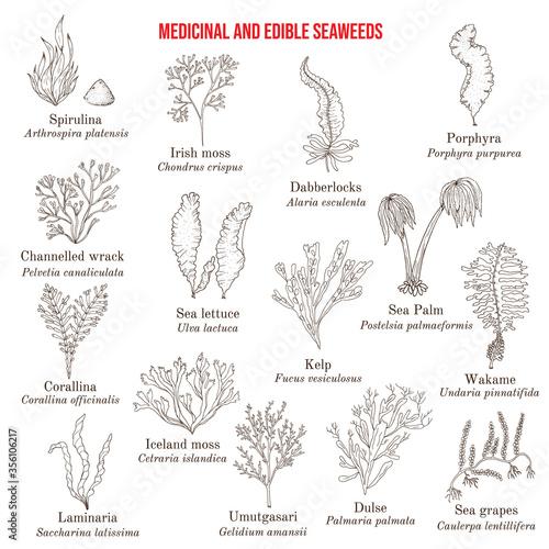 Canvas Print Big collection of edible and medicinal seaweeds