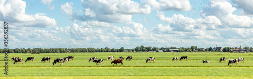 Foto Group of cows grazing in the pasture, peaceful and sunny in Dutch landscape of f