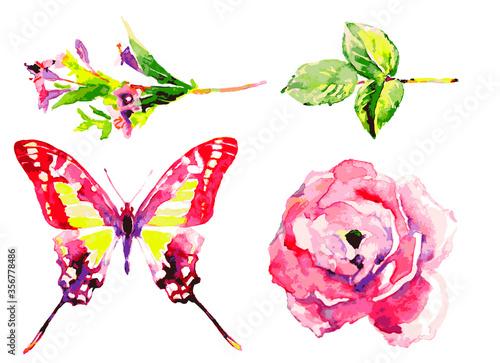 butterfly662