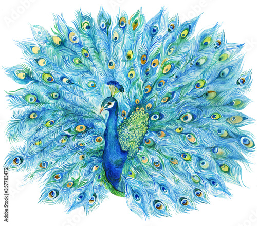 Photo Peacock with open tail Watercolor
