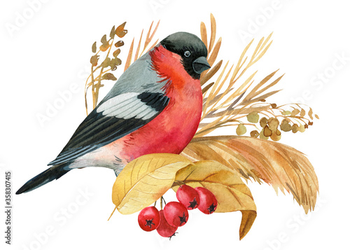 bullfinch and flowers bird, dry herbs, watercolor drawing, boho illustration, bo Tapéta, Fotótapéta