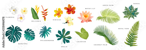 Carta da parati Set of vector realistic tropical leaves and flowers with names isolated on white background