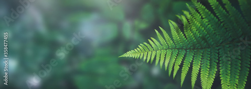 Fotografie, Obraz Beautiful green background- plants and water-green fern on a backround of abstract leafs and water drops - header, banner for nature, outdoor adventure ect