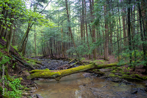 Tela Forest landscape with a creek in Pennsylvania