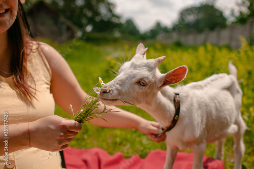 Fotografia a woman with her goat sits on the grass and feed it