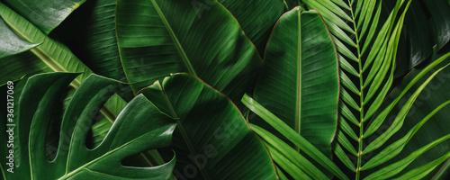 Fotografia Creative tropical green leaves banana,palm, monstera and fean layout