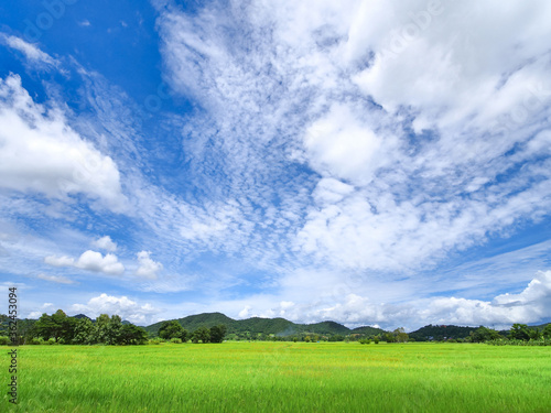 green rice field front of moutain under blue sky with white fluffy clouds