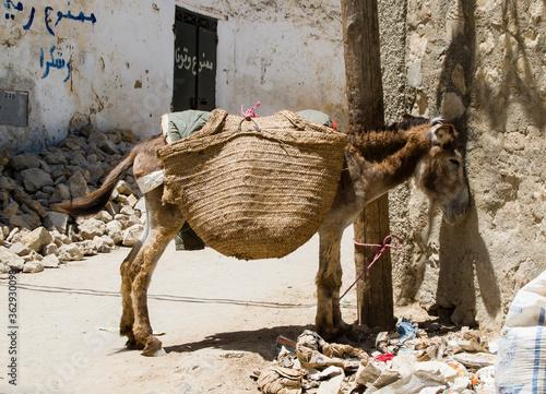 Fényképezés Full Length Side View Of Donkey Tied To Pole