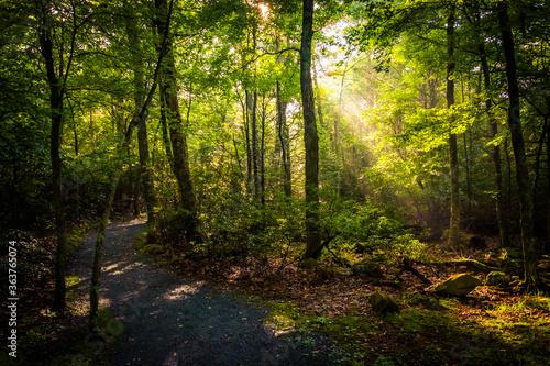 Fényképezés Scenic View Of Forest