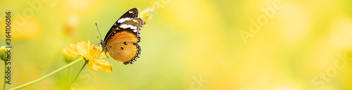 Photo Nature of butterfly and flower in garden using as background butterflies day cov